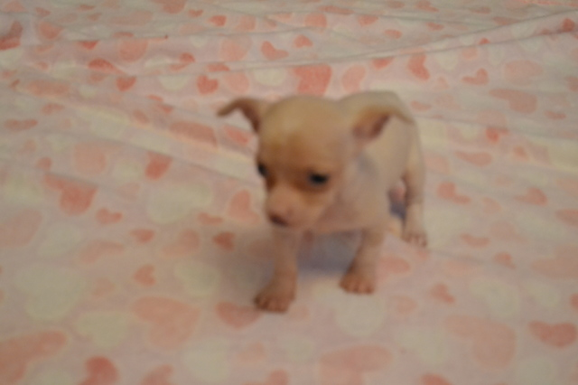 Pets For Sale In Cheyenne Wyoming Craigslist Ads Because of the chance of cross contamination to our newborn pups we do not allow unscheduled visits, we do however try to take pictures as they grow. wyoming classifieds